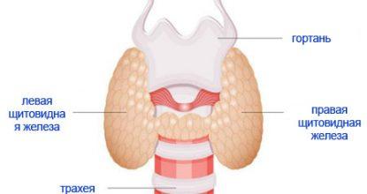 Анализы на гормоны щитовидной железы