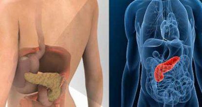 Поджелудочная железа: где находится орган и как болит