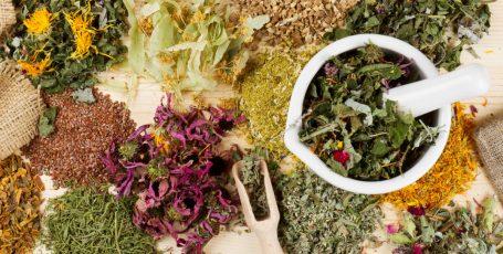 Лекарственные травы для почек: помогаем органу работать эффективно