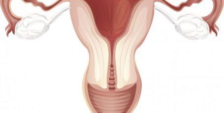 Шейка матки после родов: возможные проблемы и способы лечения при лактации