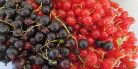 Чёрная и красная смородина — вкусное дополнение к рациону кормящей мамы