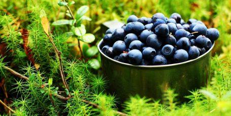 Черника и грудное вскармливание: можно ягодку?