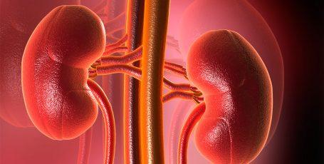 Острый гломерулонефрит: как побороть болезнь
