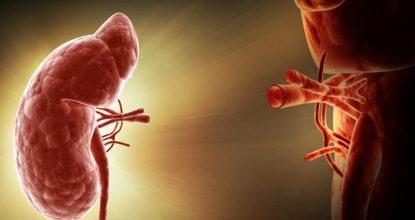 Трансплантация почки: необходимая информация о процедуре