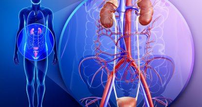Тяжёлые патологии почек: что такое светлоклеточный рак и как он лечится
